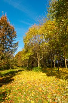Free Vivid Autumn Grove. Royalty Free Stock Images - 16538399