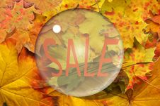 Free Autumn Sheet And Sale Royalty Free Stock Photos - 16538698
