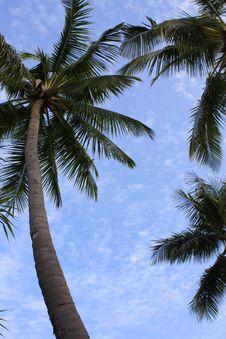 Free Palms Background Stock Photo - 16538730