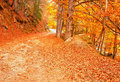 Free Nice Forest In Autumn Royalty Free Stock Photos - 16547368