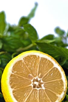 Free Halved Lemon And Mint Royalty Free Stock Photos - 16540598