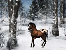 Free Horse In Winter Stock Images - 16540984