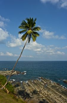 Free Palm Tree On Tropical Coast Stock Images - 16541254