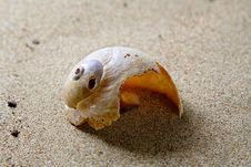Free Cockleshell And Sand Royalty Free Stock Images - 16543009