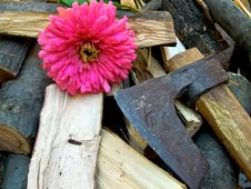 Free Ax And Chopped Wood Stock Photo - 16543760