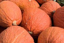 Free Bumpy Pumpkins Stock Photos - 16544233