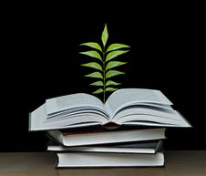 Free Tree Growing From Book Royalty Free Stock Images - 16544359