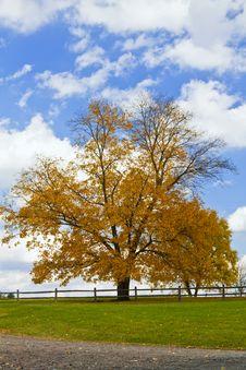 Free Tree Stock Photos - 16545943