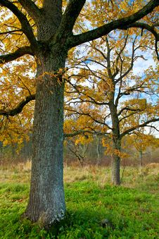 Free Autumn Trees Royalty Free Stock Photography - 16546357