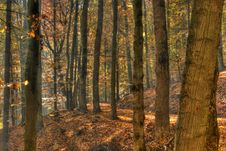 Free Autumn In Forest Stock Photo - 16547470