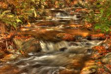Free Forest Stream Stock Photography - 16547532