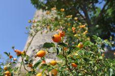Free Sun Drops Royalty Free Stock Photography - 16548647