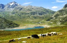 Free Mountain Landscape Stock Photo - 16548750