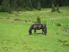 Free Black Horse Royalty Free Stock Image - 16549316