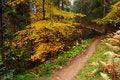 Free Autumn Wood Stock Photo - 16554850