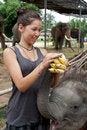 Free Girl Is Feeding Baby Elephant Stock Photo - 16555950
