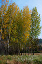 Free Colors Of Autumn Royalty Free Stock Image - 16559276