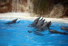 Free Dolphins In Blue Water Royalty Free Stock Photo - 16552935