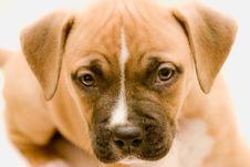 Free Dog Royalty Free Stock Photos - 16554128