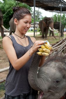 Girl Is Feeding Baby Elephant Stock Photo