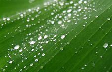 Free Dew On Banana Leaf Stock Photo - 16557250