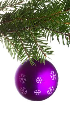 Free Purple Ball On Fir Tree Branch Stock Photo - 16557350