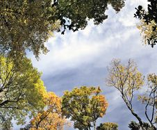 Free Panorama,  Autumn Leaves Of Maple Royalty Free Stock Photography - 16557777