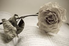 The Dry Rose Is Lying On Book Stock Photo