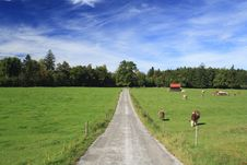 Free Road In A Meadow Stock Images - 16559154
