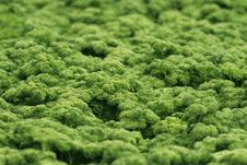 Free Parsely Field Royalty Free Stock Image - 16559226
