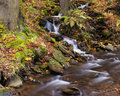 Free Forest Stream Royalty Free Stock Images - 16563089