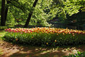 Free Beautiful Sunny Morning At The Keukenhof Gardens Royalty Free Stock Image - 16567176