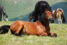 Free Beautiful Wild Horses Stock Photography - 16560642