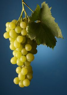 Free Bunch Of Grapes Royalty Free Stock Images - 16561859