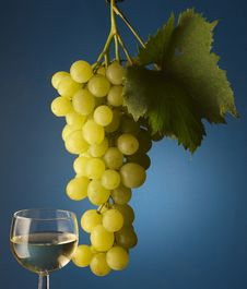 Free Bunch Of Grapes Royalty Free Stock Photo - 16561935