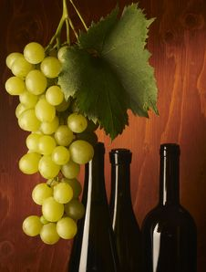 Free Bunch Of Grapes Stock Photos - 16562013