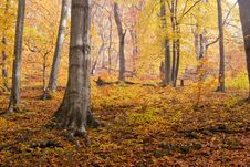 Free Autumn In Forest Royalty Free Stock Images - 16562019