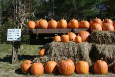 Free Pumpkins For Sale Stock Photography - 16562732