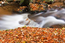 Free Forest Stream Royalty Free Stock Photos - 16563178
