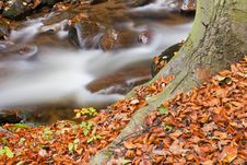 Free Forest Stream Stock Image - 16563221