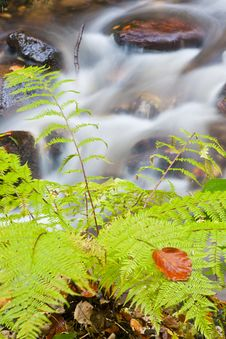 Free Forest Stream Stock Photography - 16563272