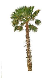 Free Palm Stock Image - 16563701