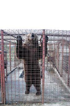 Free Captive Bear Stock Photo - 16564170