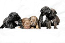 Free Snuggling Puppies Royalty Free Stock Image - 16566316