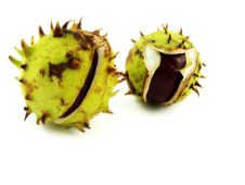 Free Chestnuts Stock Photo - 16567480