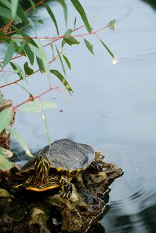 Free A Relaxe Turtle Royalty Free Stock Image - 16567986