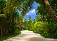 Free Pathway In Tropical Park Royalty Free Stock Images - 16568009