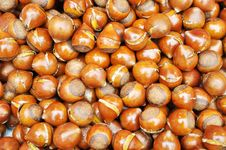 Free Crisp Fried Chestnut Royalty Free Stock Photos - 16568938