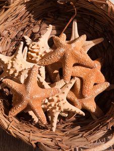 Free Sea Stars . Royalty Free Stock Photo - 16569045