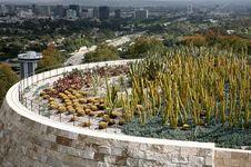 Free Cactus Garden Stock Image - 16569541